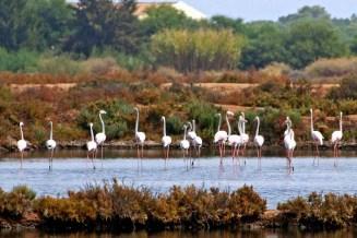 Een groepje flamingo's in Ria Formosa.