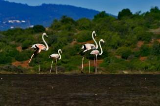 thumbnail_flamingos-01