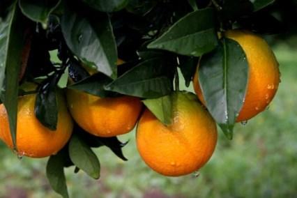 011-sinaasappelhoofdstad-silves-01