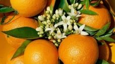 011-sinaasappelhoofdstad-silves-02