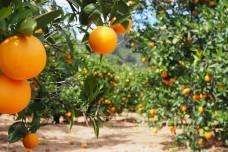011-sinaasappelhoofdstad-silves-03