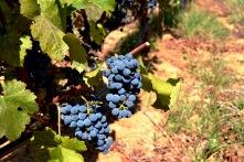 021. Wijn uit de Algarve 02