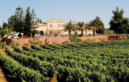 021. Wijn uit de Algarve 03