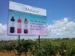 021. Wijn uit de Algarve 05